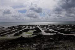 Cancale, parcs à huîtres