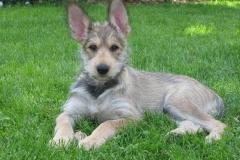 Oui, j'ai de grandes oreilles. Et alors ?