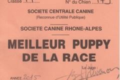 Saint-Etienne-2015-résultat