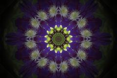 Mandala Clématite Bugiste