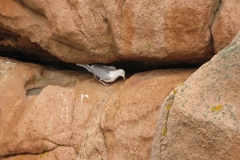 Refuge pour oiseaux